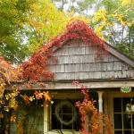 Rose Cottage Fall Colors Niagara Falls Wedding Chapel on the Lane. www.niagaraweddingchapel.com 800.393.7270